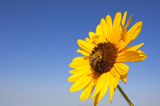 Subscribers are drawn to lifecycle marketing like a bee to nectar.